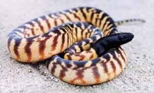 Python-300x182.jpg
